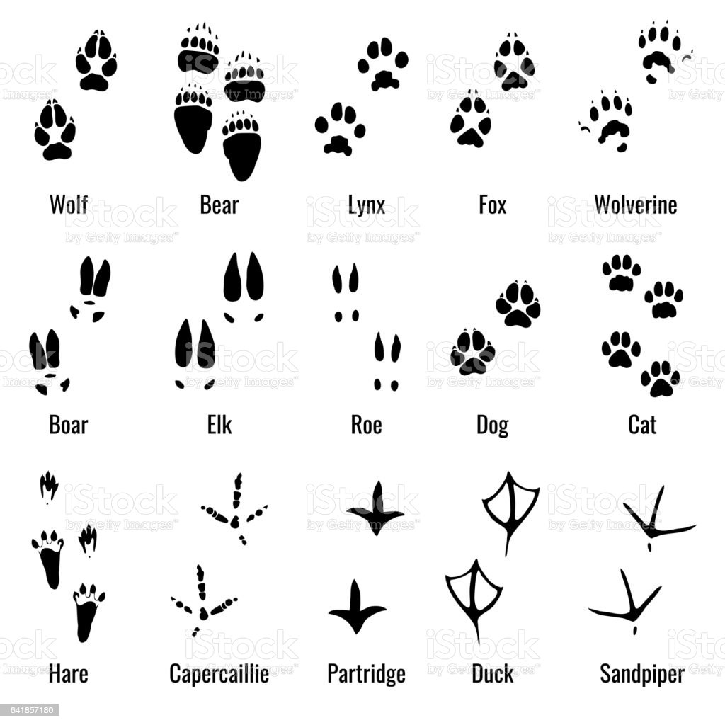 Wildlife animals, reptiles and birds footprint, animal paw prints...