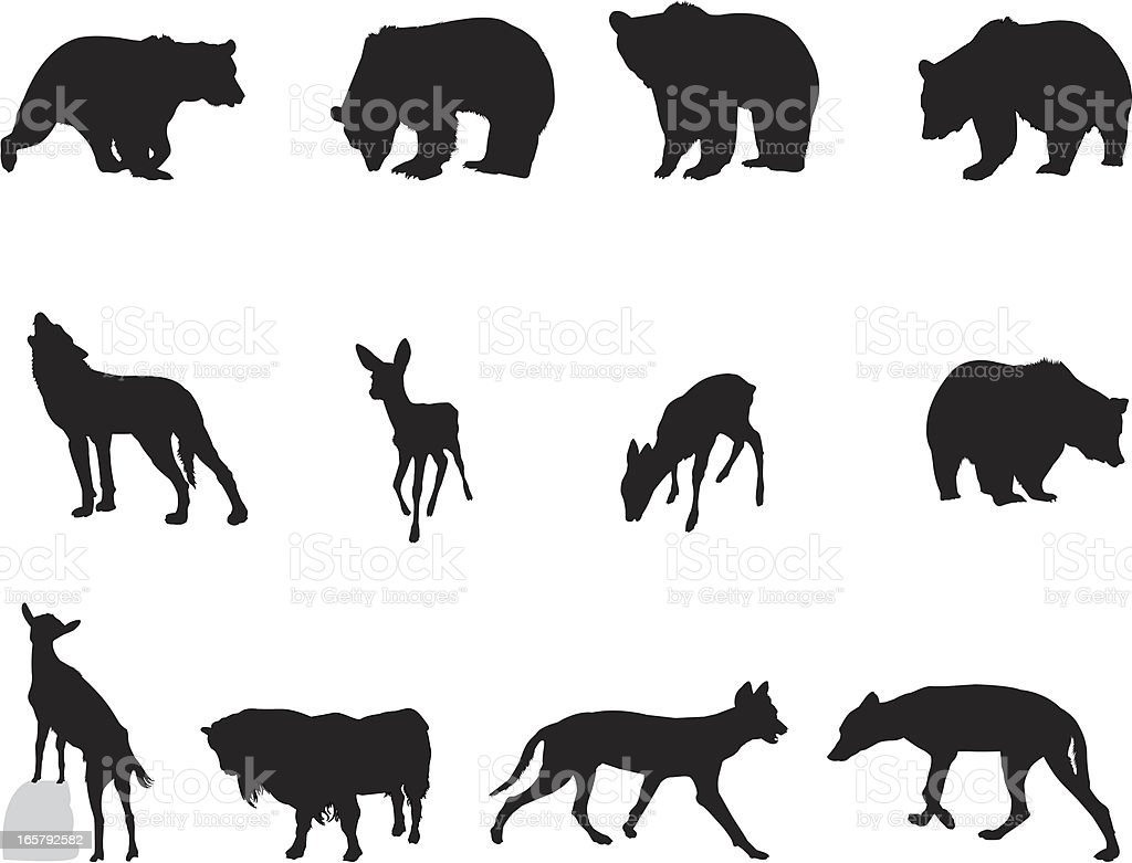 Wildlife vector art illustration