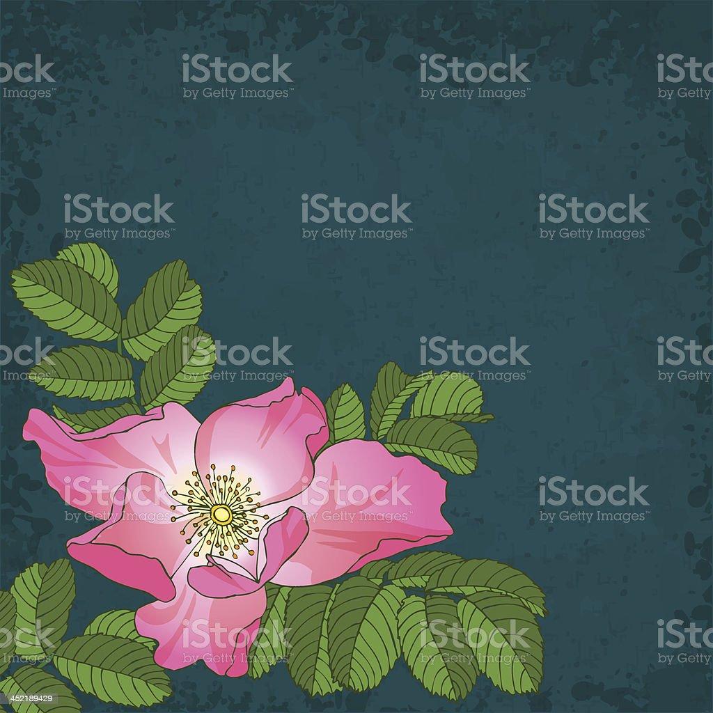 wildrose royalty-free stock vector art