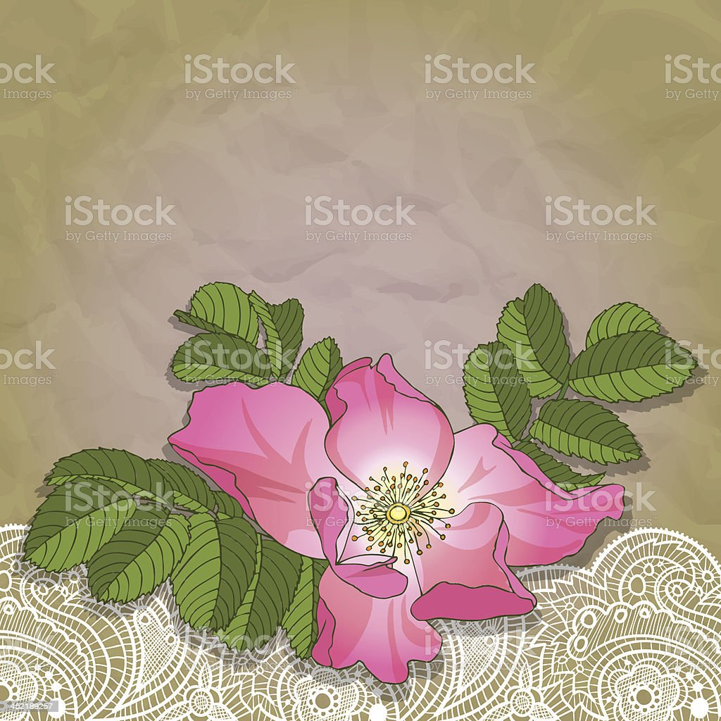 wildrose&lace royalty-free stock vector art