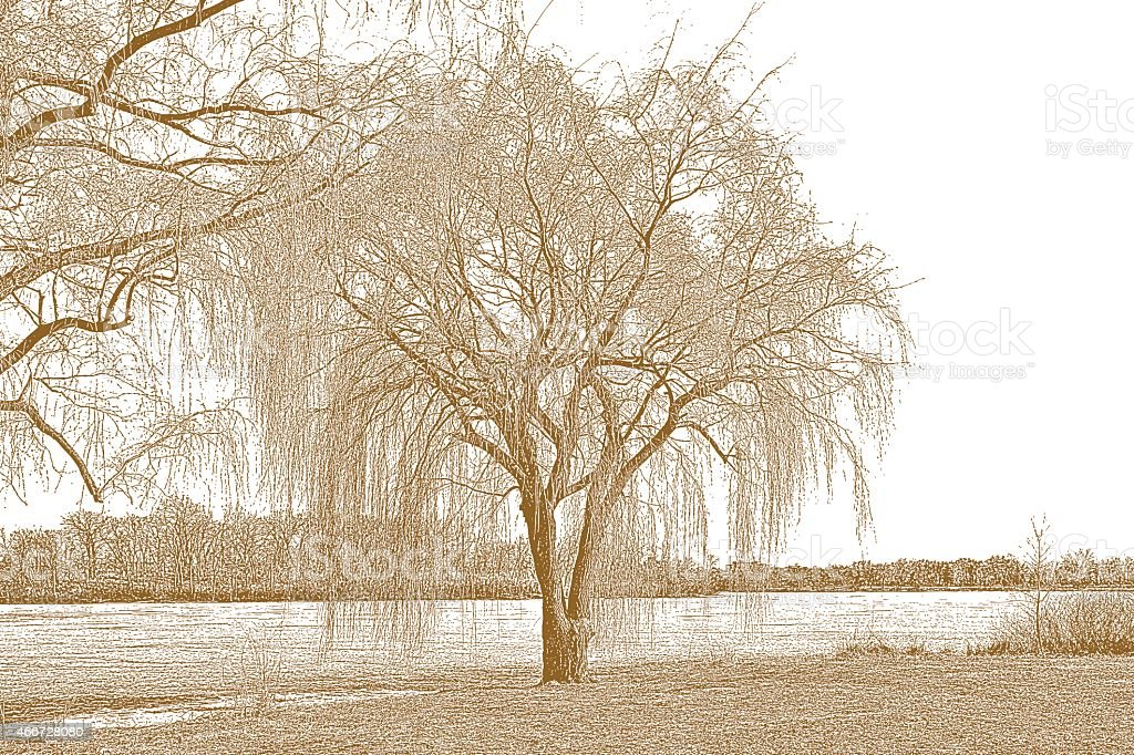 Willow Tree and Lake In Early Spring. Sepia Tone vector art illustration