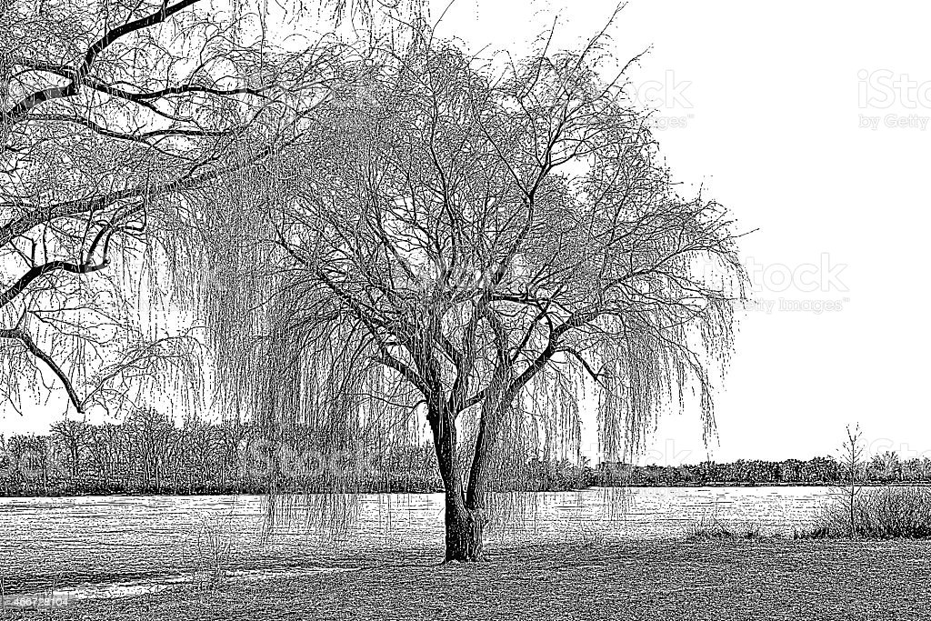 Willow Tree and Lake In Early Spring vector art illustration