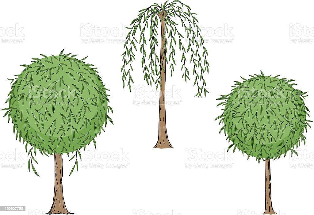 willow tree vector art illustration
