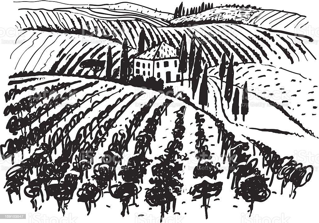 Wine & Grape illustration. vector art illustration