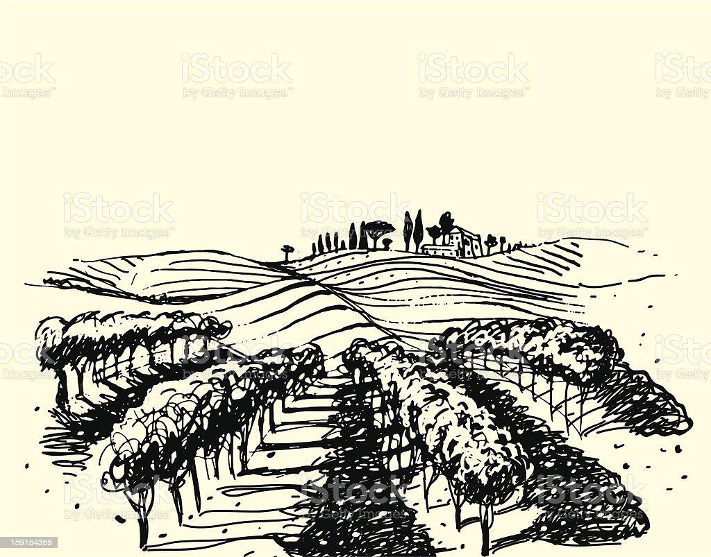 Wine & Grape illustration. royalty-free stock vector art