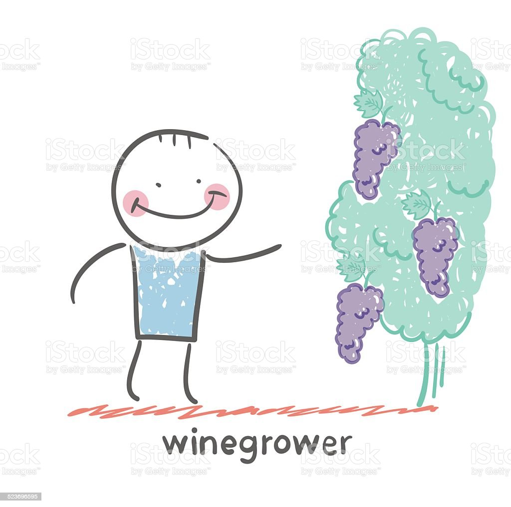 winegrower looks at grapes vector art illustration