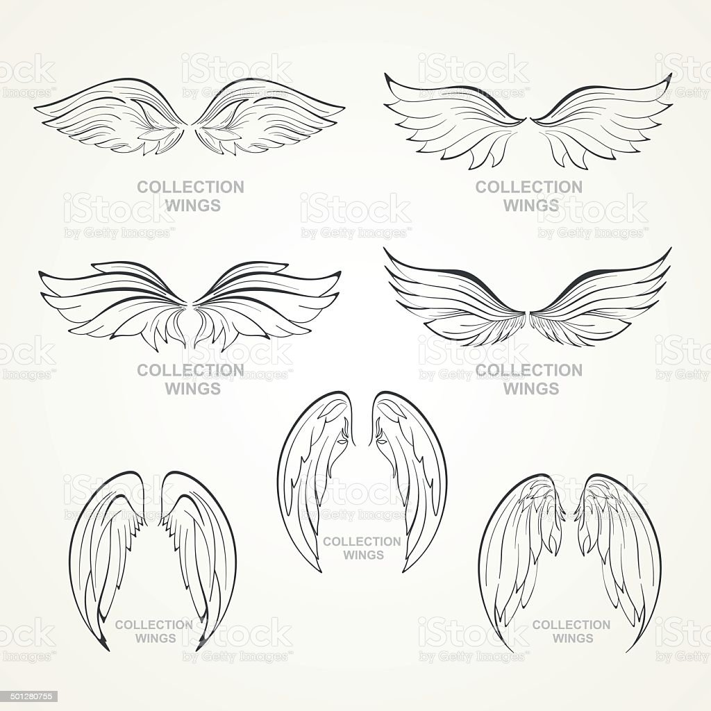 wings collection vector art illustration