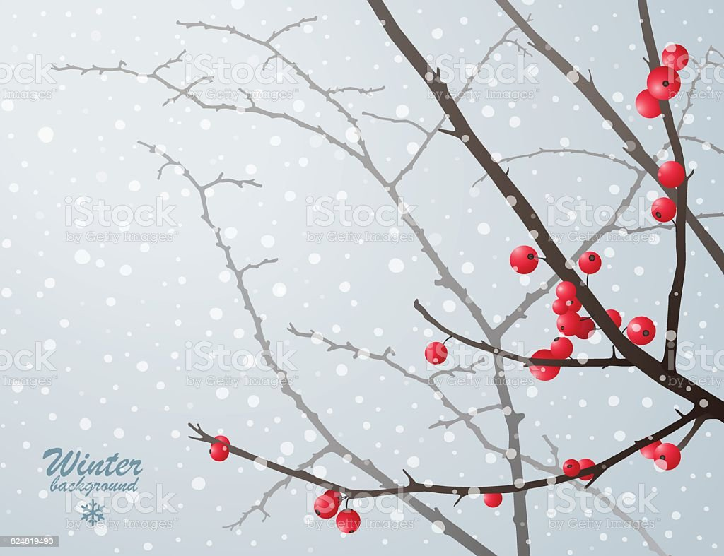 Winter bare branches with red berries vector art illustration