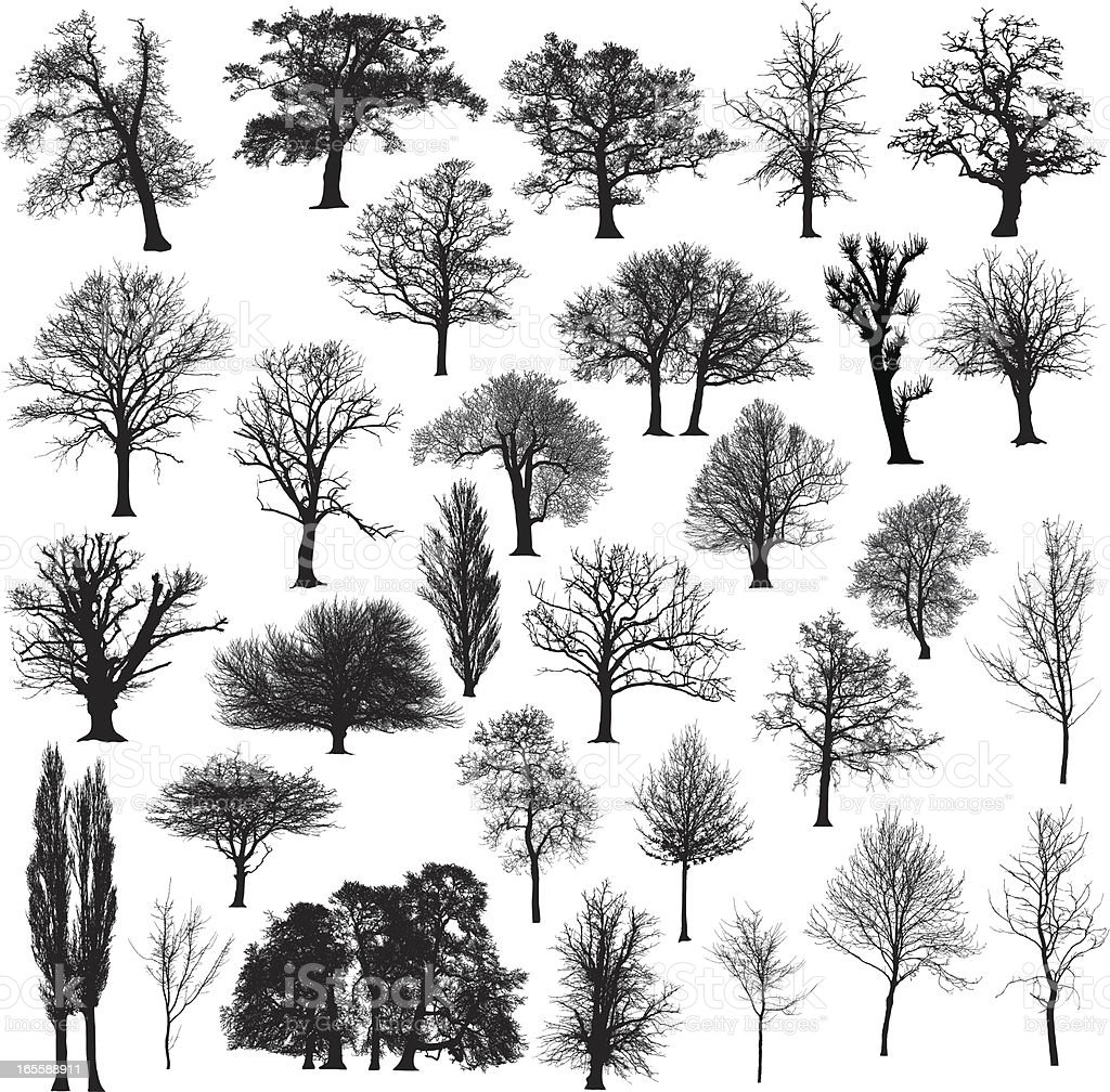 Winter tree silhouette collection vector art illustration