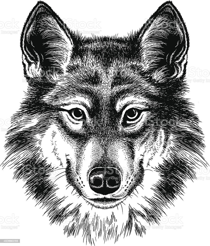 Wolf portrait royalty-free stock vector art