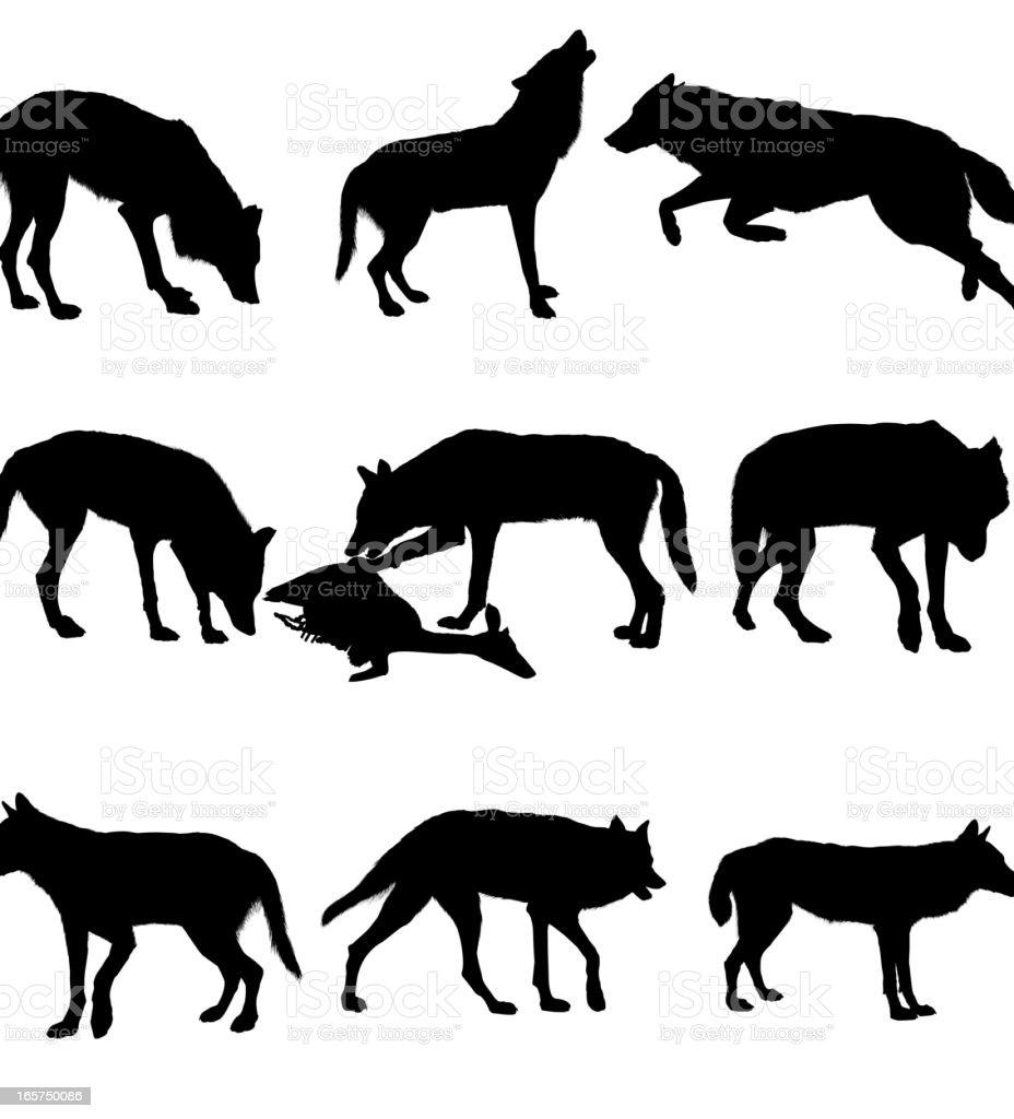 Wolf vector art illustration