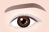 Woman brown eye.