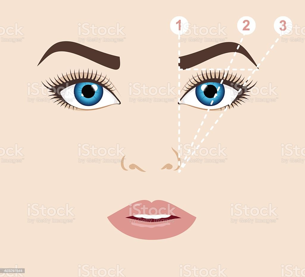 Woman face and eyebrow scheme (mapping). Trimming. Vector illustration. vector art illustration
