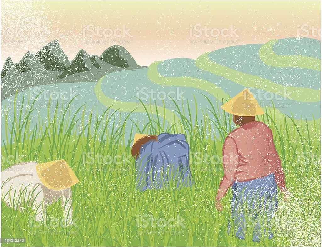 Women working in rice fields vector art illustration