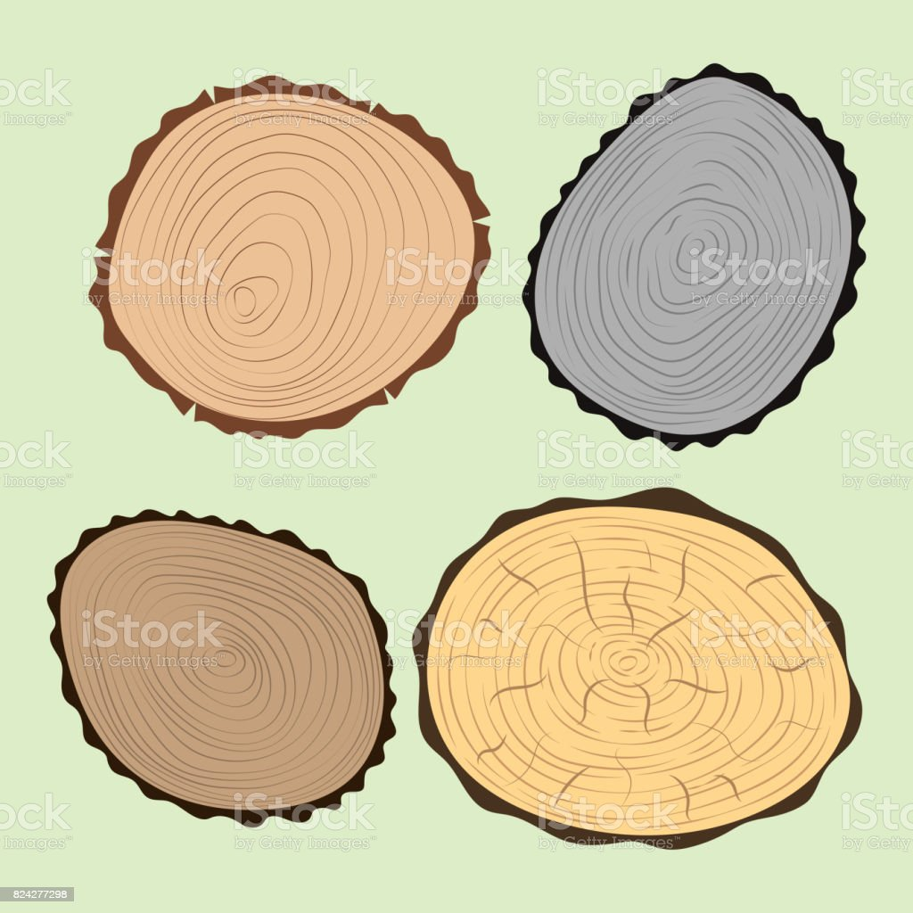 Wood slice texture tree circle cut raw material set detail plant years history textured rough forest vector illustration vector art illustration