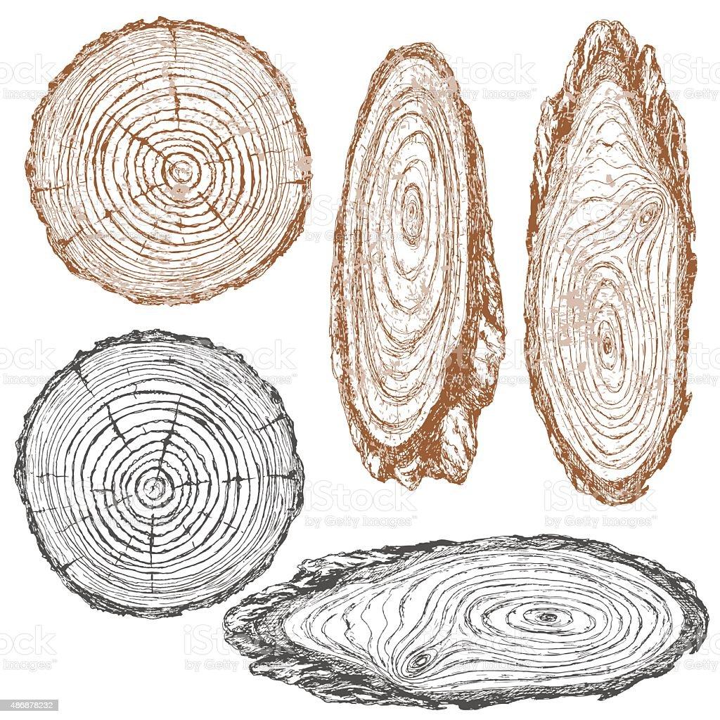 Wood texture of trunk tree sketch vector art illustration