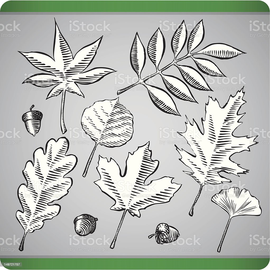 Woodcut Foliage vector art illustration