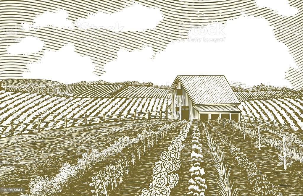 Woodcut Garden vector art illustration
