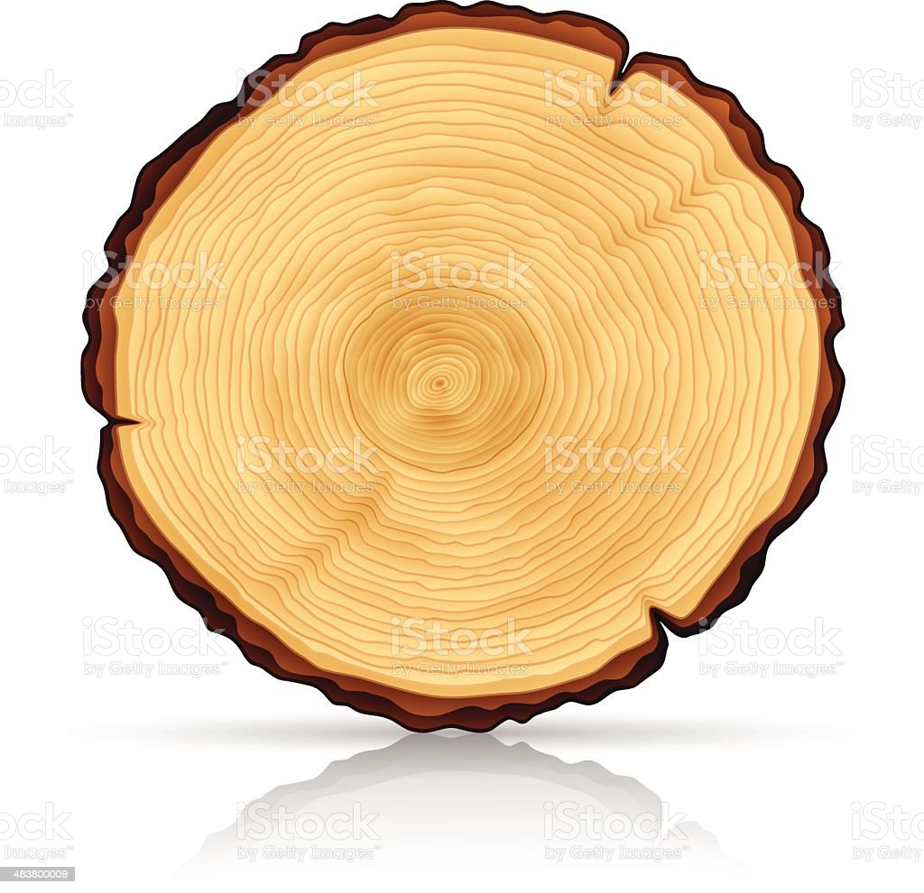 Wooden Cross section vector art illustration