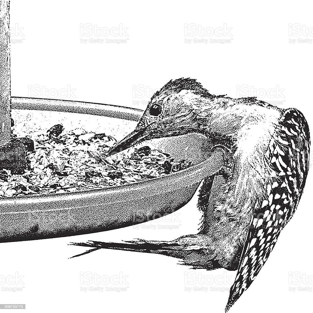 Woodpecker Eating At A Bird Feeder vector art illustration