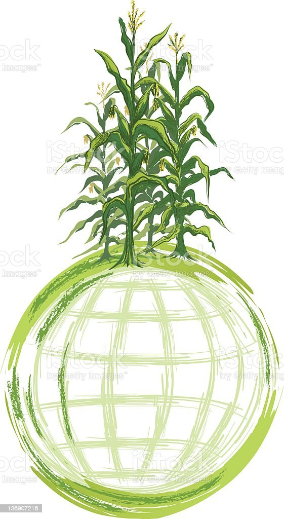 World Grain concept Image - Corn Stalks Growing on Globe royalty-free stock vector art