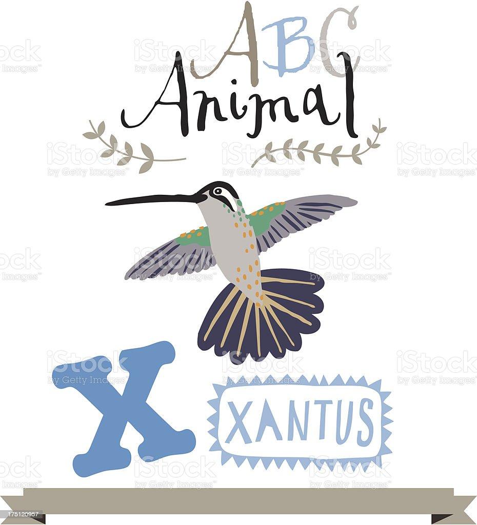 ABC xantus royalty-free stock vector art