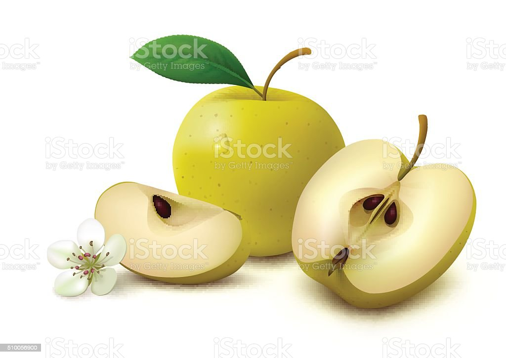Yellow apple with slices on white background vector art illustration