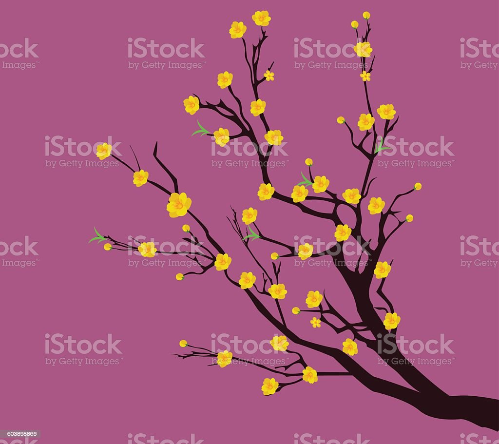 Yellow Apricot Flower traditional lunar new year in Vietnam vector art illustration
