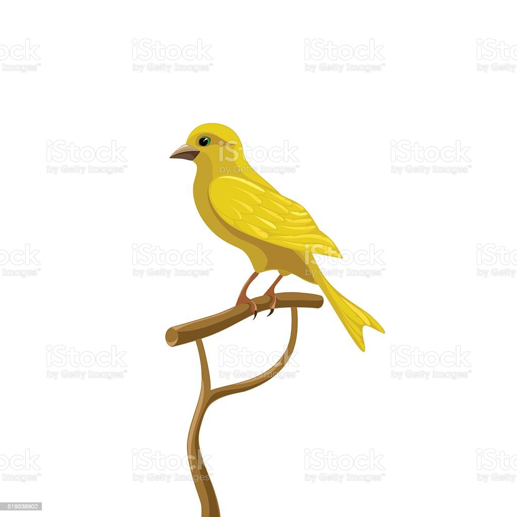 Yellow canary vector art illustration