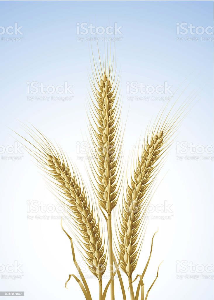 yellow ears of wheat royalty-free stock vector art