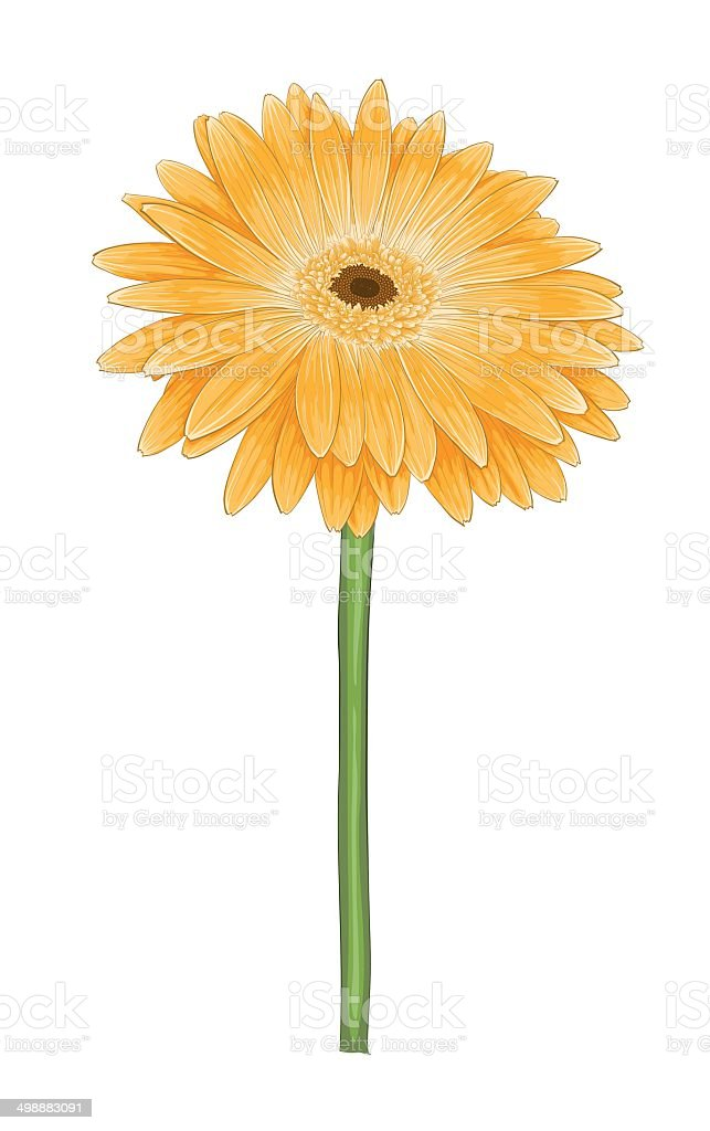 yellow gerbera with watercolor effect isolated on white background vector art illustration