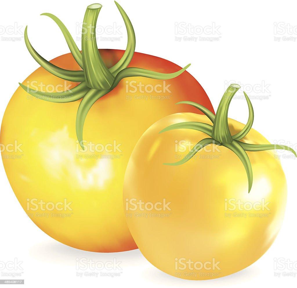 Yellow Heirloom Tomato royalty-free stock vector art