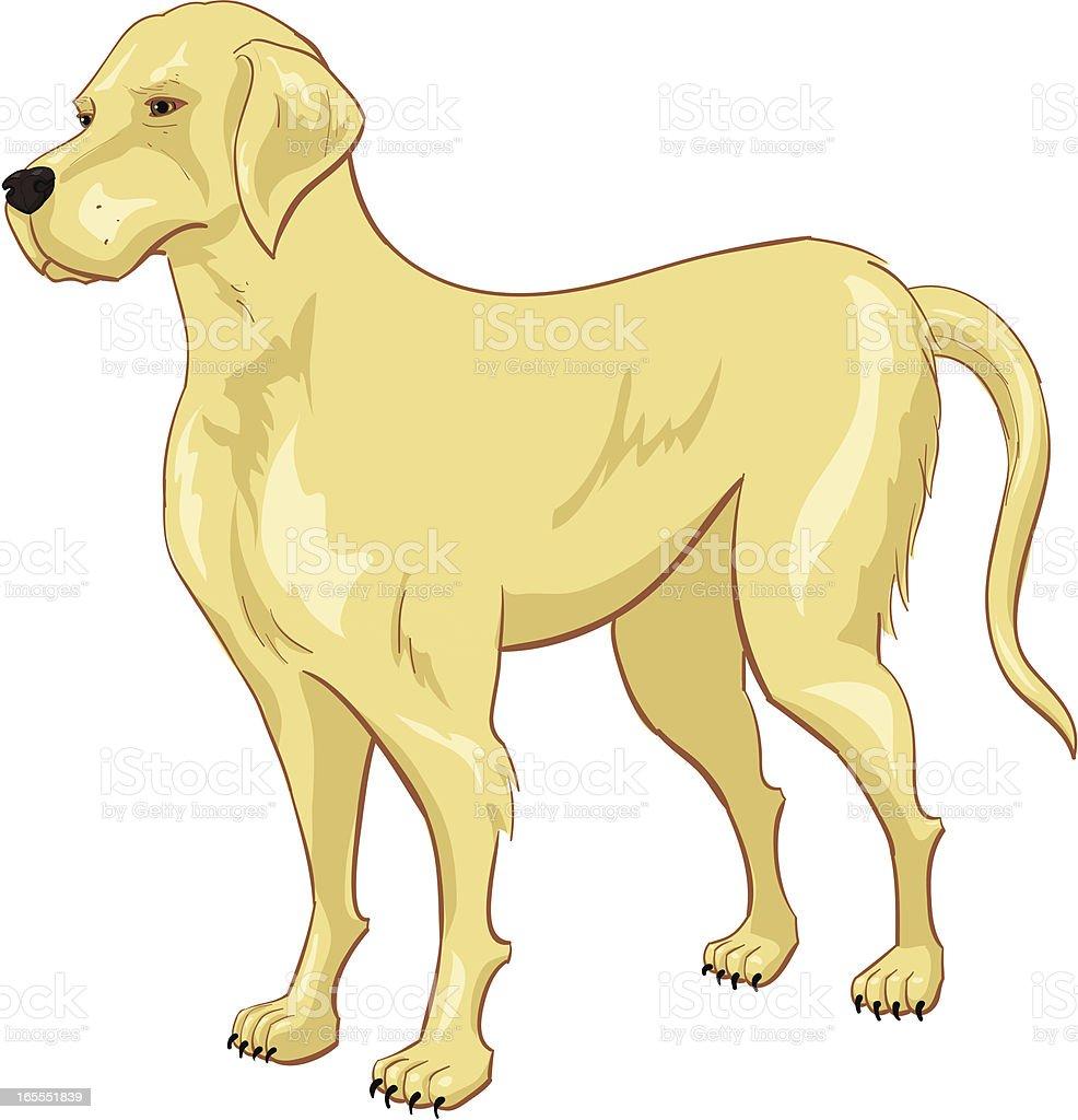 yellow lab vector art illustration