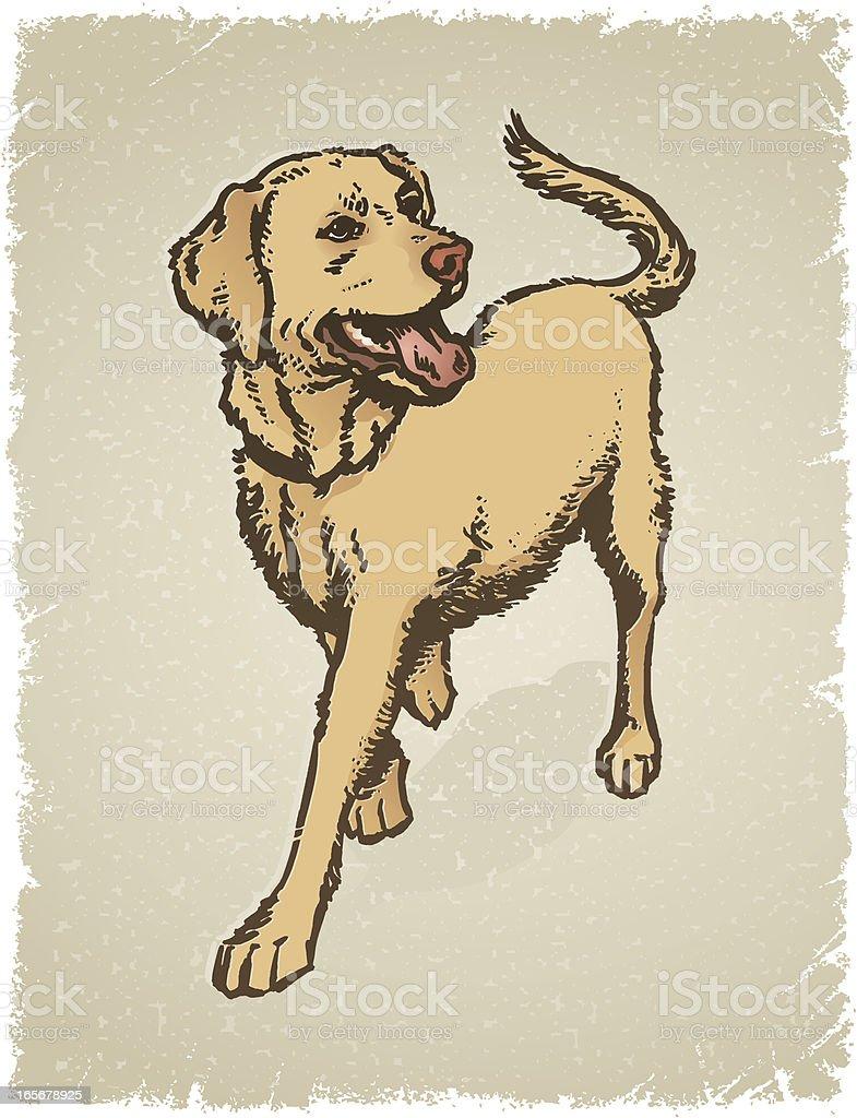 Yellow Labrador Grunge royalty-free stock vector art