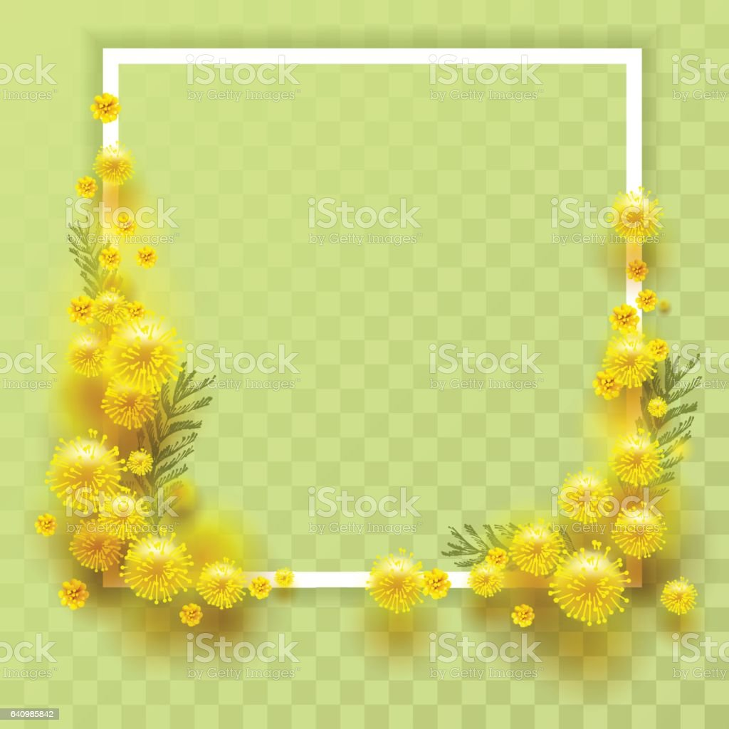 Yellow mimosa on transparent background. Template frame for greeting card vector art illustration