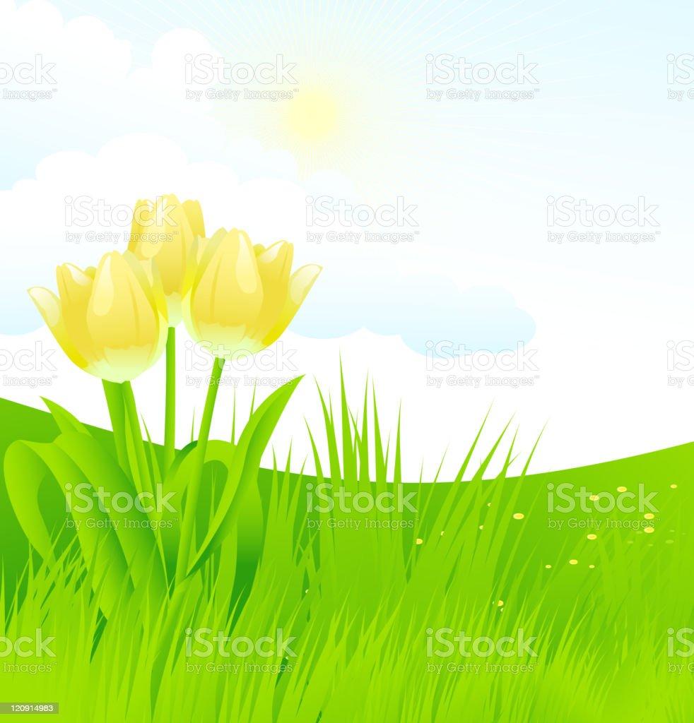 Yellow tulips royalty-free stock vector art