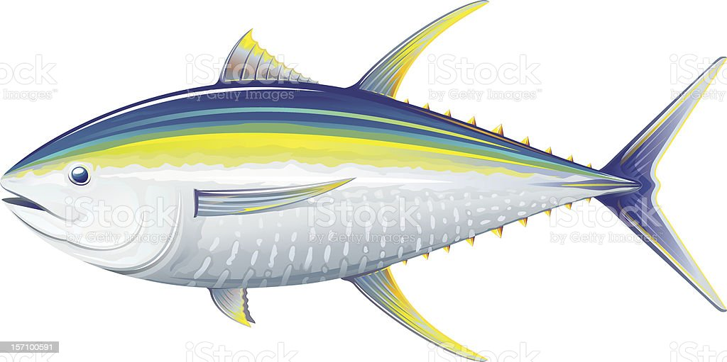 Yellowfin tuna royalty-free stock vector art