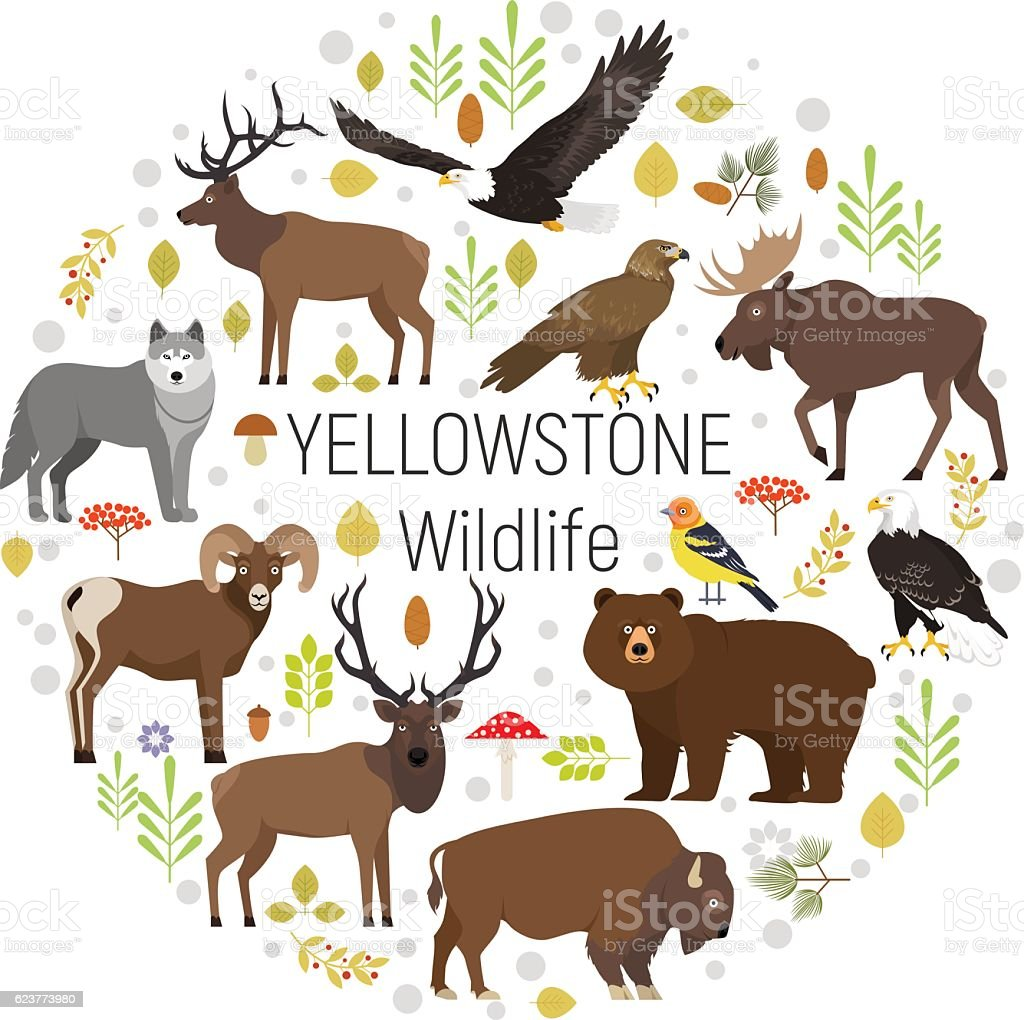 Yellowstone animals moose, elk, bear, wolf, eagle, bison  circle set vector art illustration