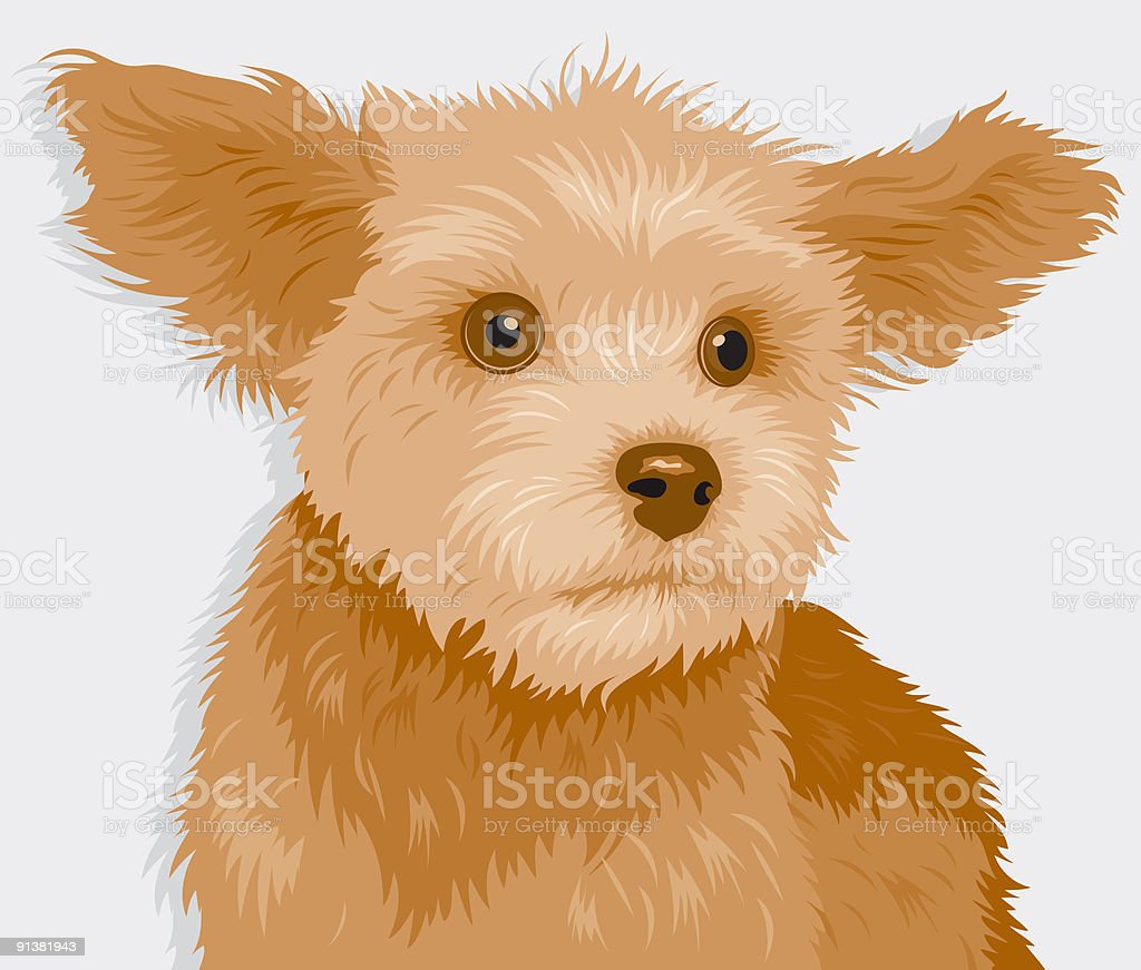 Yorkie royalty-free stock vector art