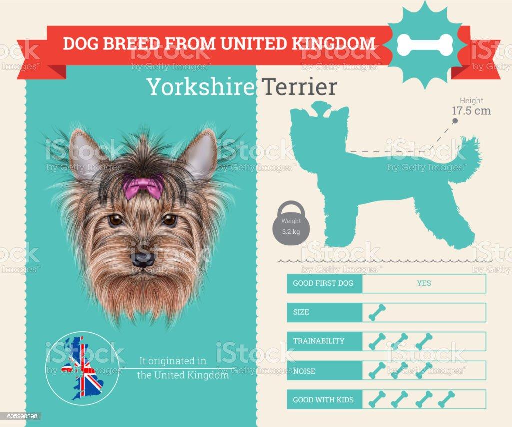 Yorkshire Terrier dog breed vector infographics vector art illustration