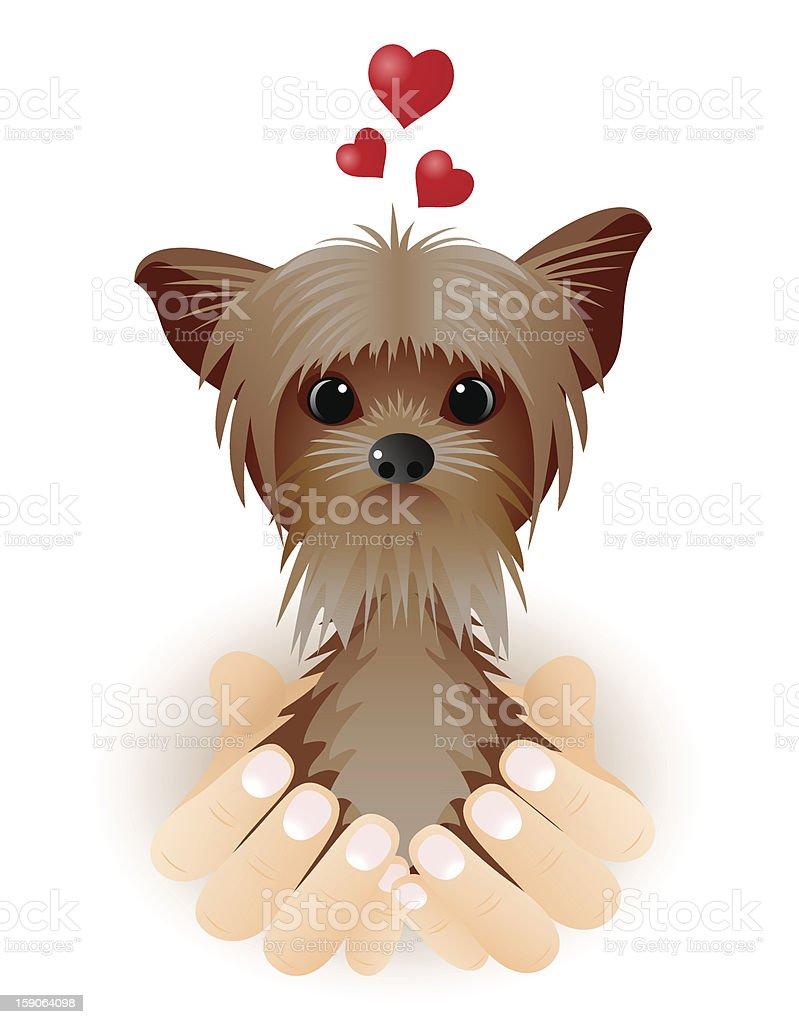 Yorkshire Terrier in love. royalty-free stock vector art