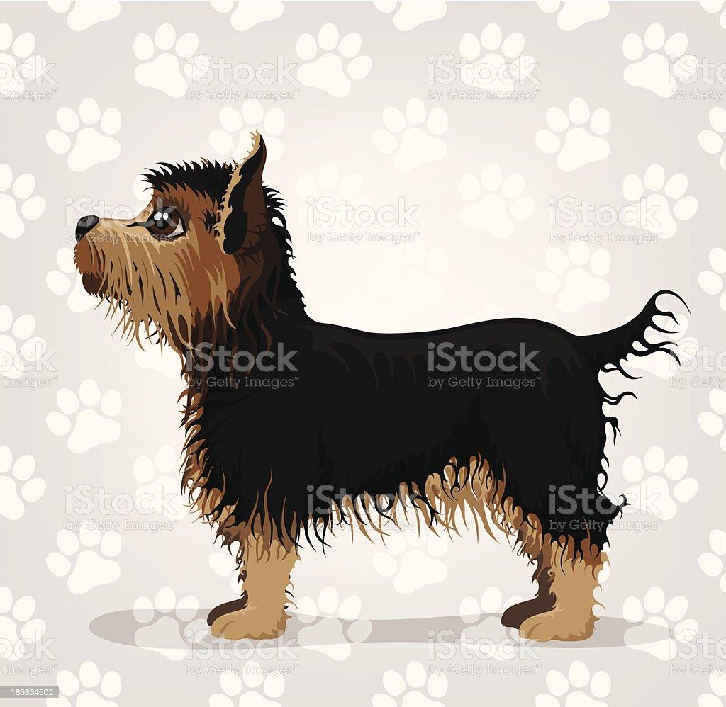 Yorkshire Terrier royalty-free stock vector art