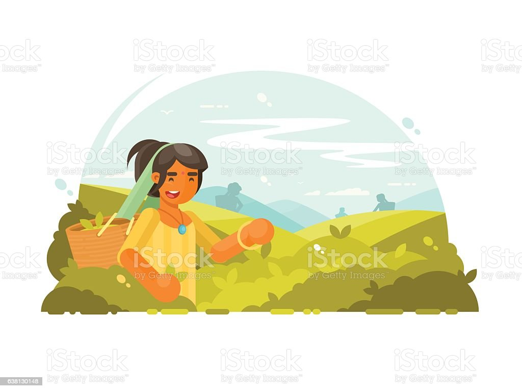 Young boy collects tea vector art illustration