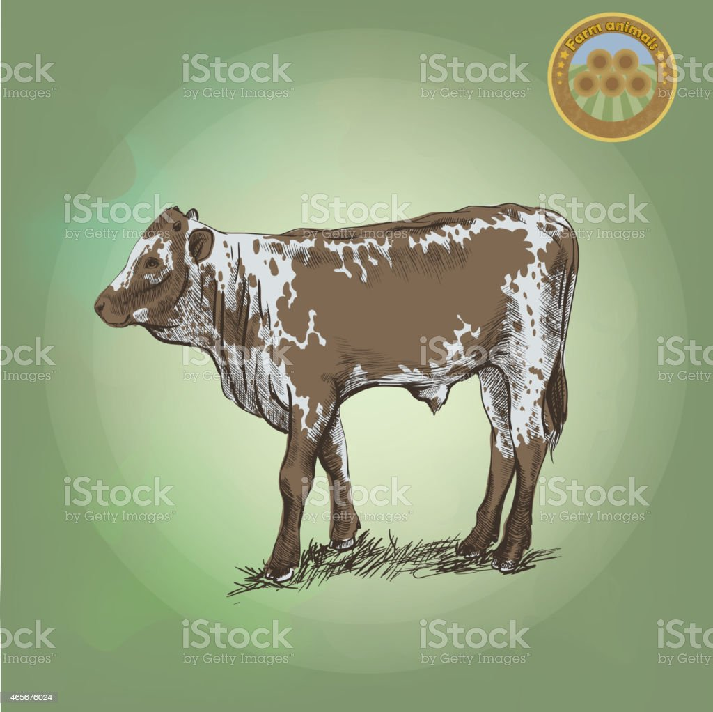 young bull vector art illustration