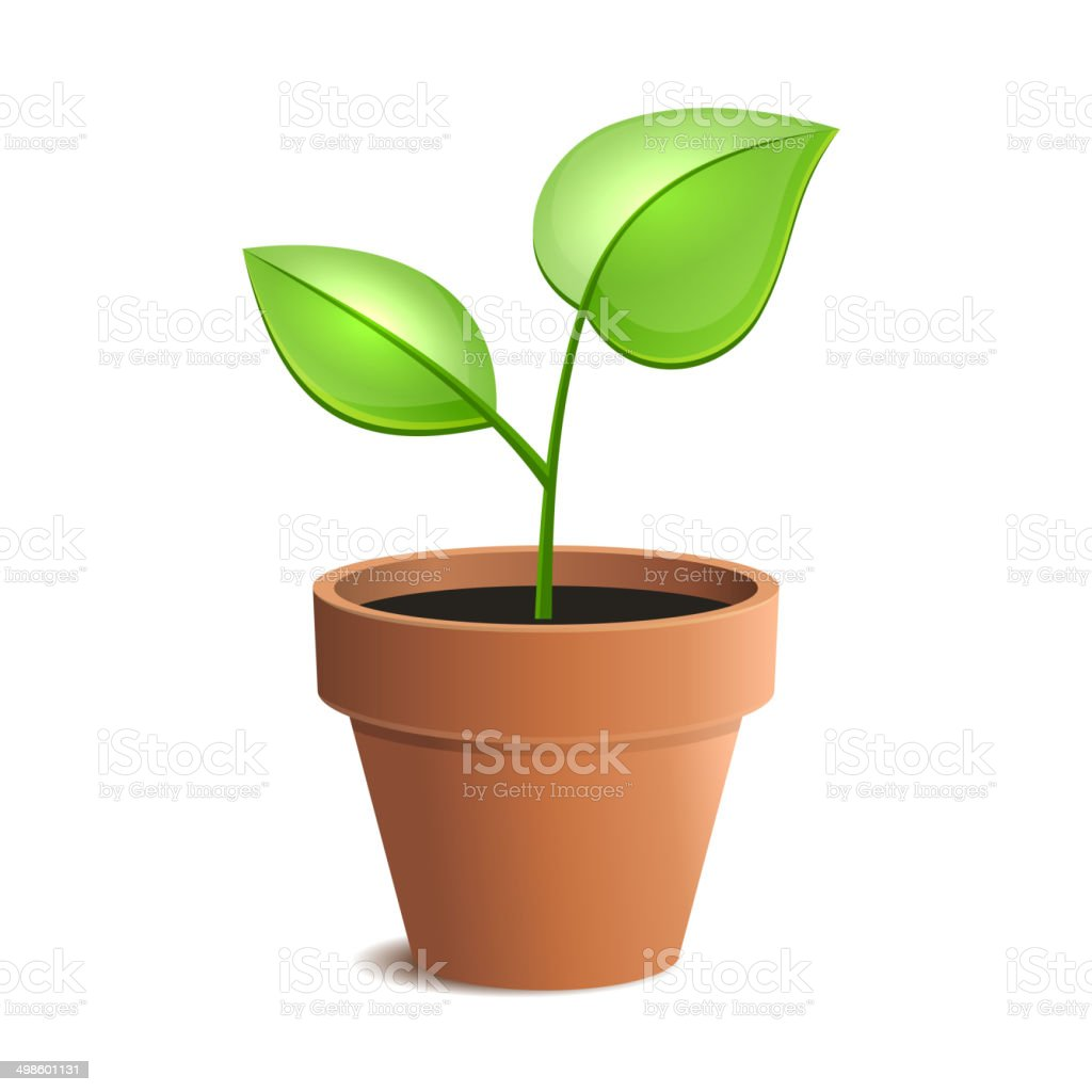 Young Green Plant in Pot Isolated on the White Backgrounds. royalty-free stock vector art