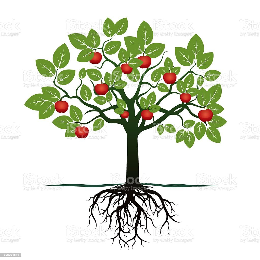 Young Green Tree, Roots and Red Apples. Vector Illustration. vector art illustration