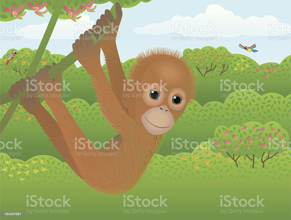 young Orang-Utan with jungle Background. royalty-free stock vector art