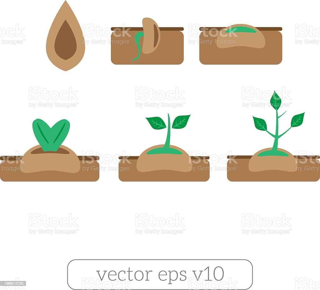 Young plant life process icons set vector art illustration