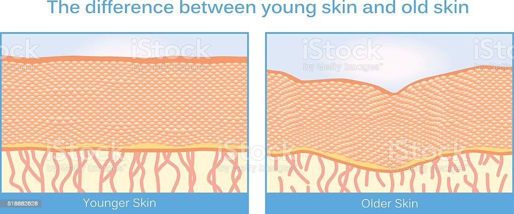 Young skin and old skin. vector art illustration
