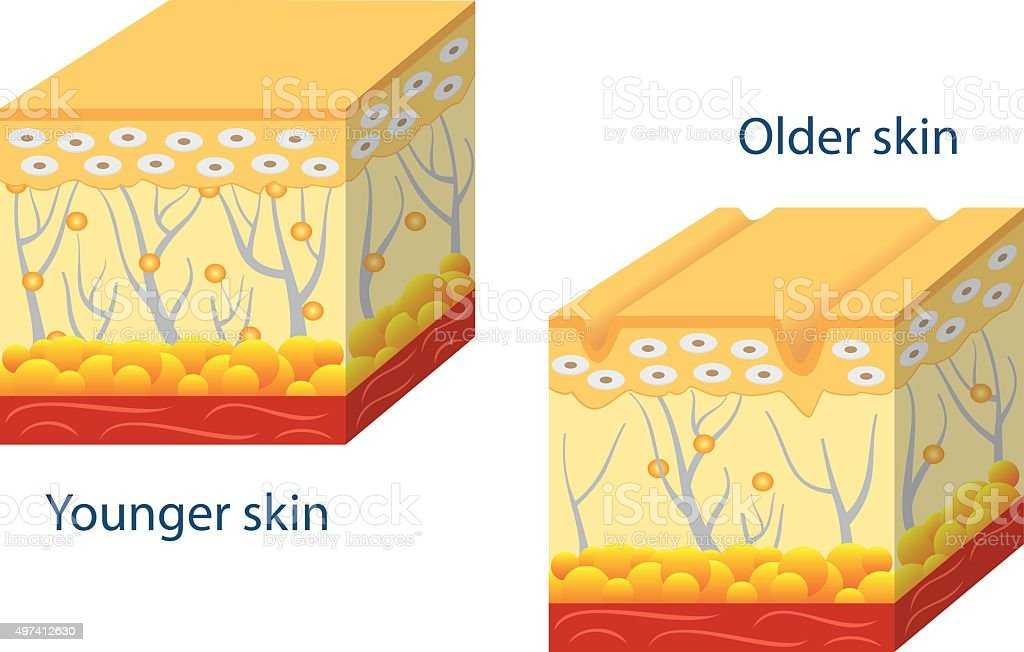 Younger skin and aging skin. vector art illustration
